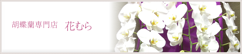 胡蝶蘭の贈り物なら、広島県福山市の胡蝶蘭専門店花むらにお任せください。ギフト用胡蝶蘭は年間300鉢以上の取扱実績があり、全国からお電話でのご注文にも対応させていただきます。お気軽に09082407566までお問い合わせください